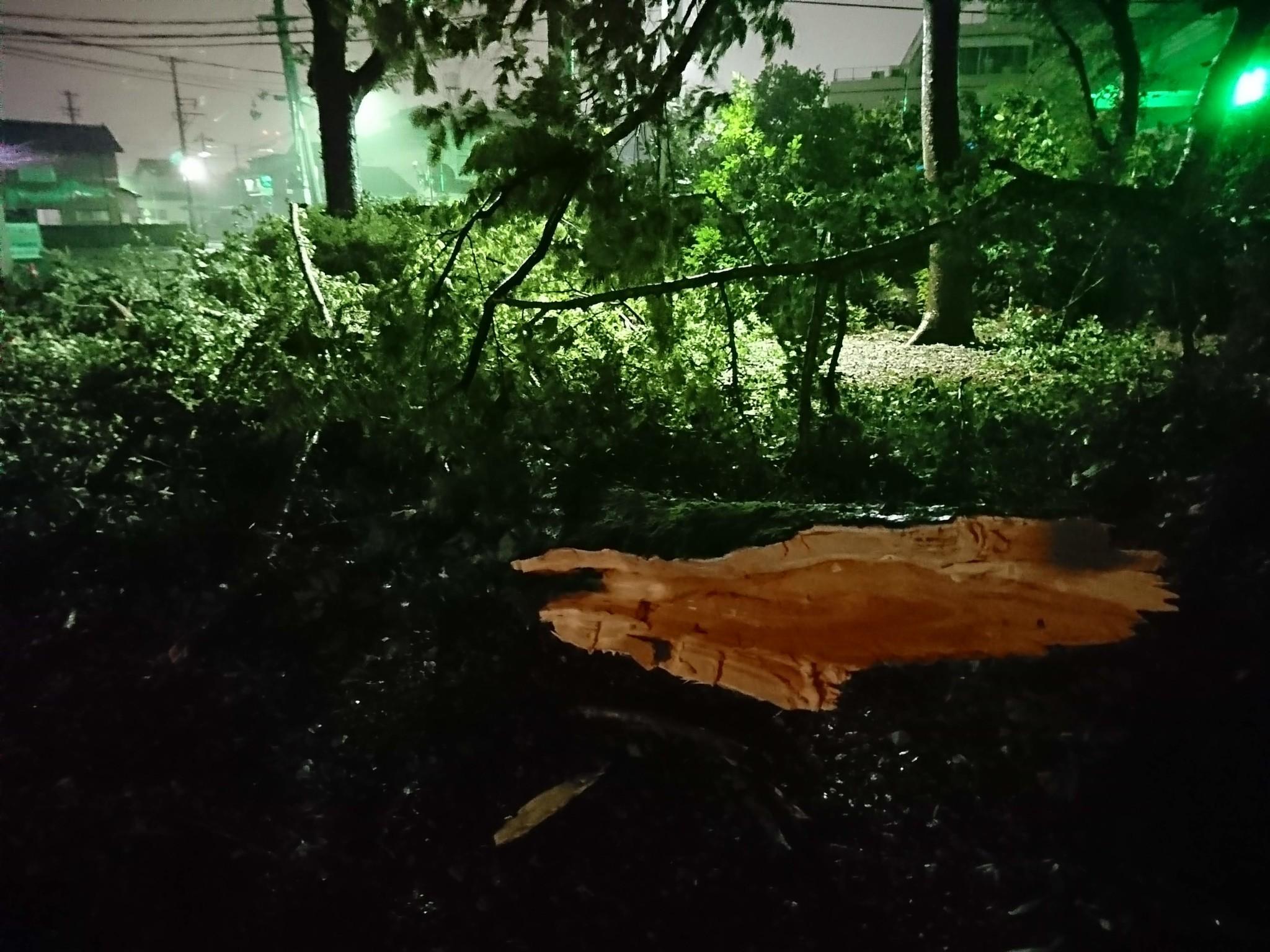 オオイチョウ損壊(平成30年9月台風21号)